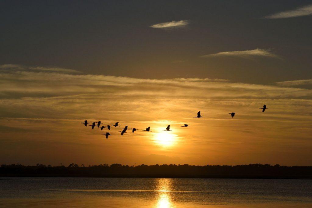 linnud loojangus